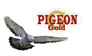 Pigeon Gold